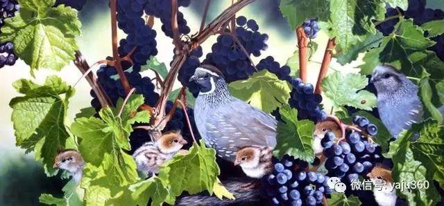 加拿大Julia Hargreaves花鸟绘画插图15