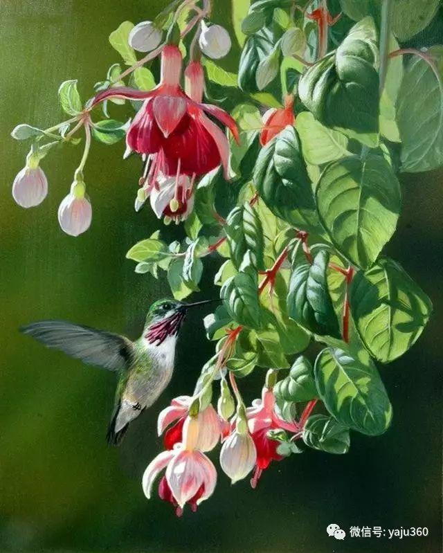 加拿大Julia Hargreaves花鸟绘画插图19