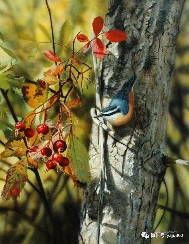 加拿大Julia Hargreaves花鸟绘画插图29