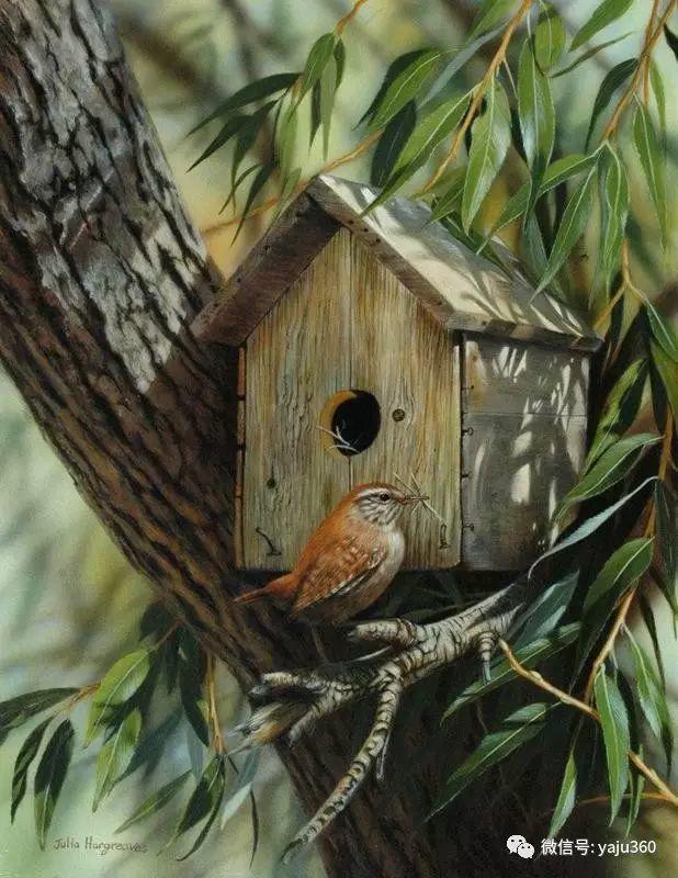 加拿大Julia Hargreaves花鸟绘画插图31