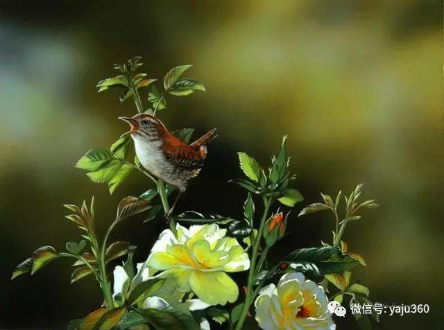 加拿大Julia Hargreaves花鸟绘画插图43