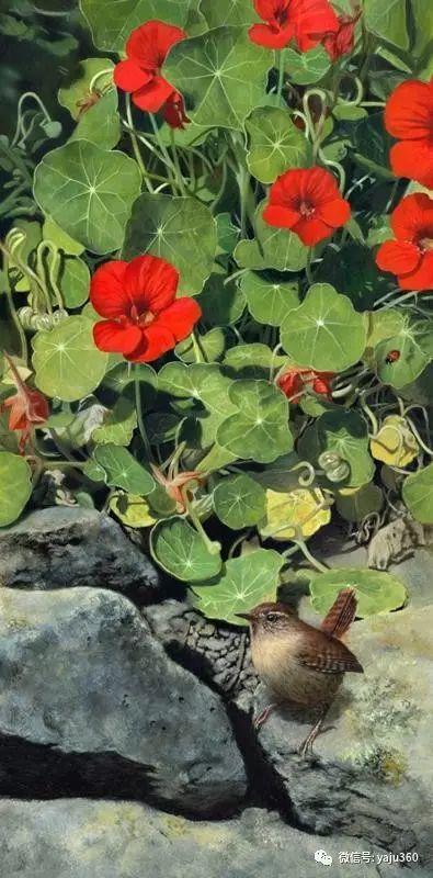 加拿大Julia Hargreaves花鸟绘画插图57