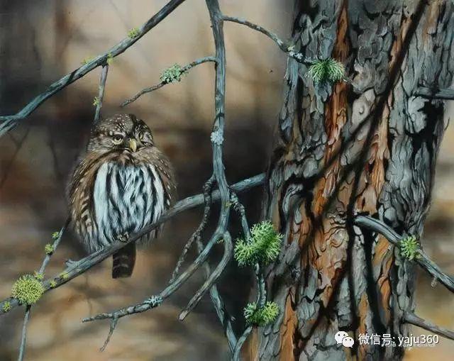 加拿大Julia Hargreaves花鸟绘画插图79
