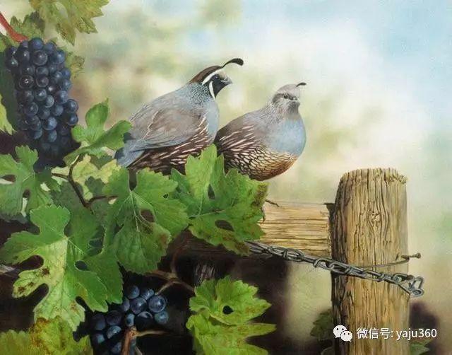 加拿大Julia Hargreaves花鸟绘画插图81