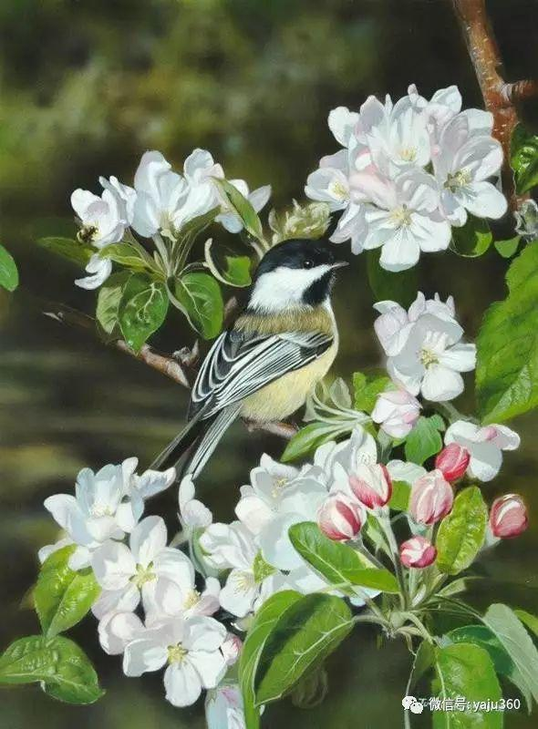 加拿大Julia Hargreaves花鸟绘画插图99