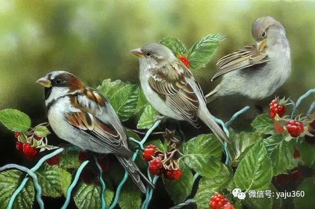 加拿大Julia Hargreaves花鸟绘画插图127