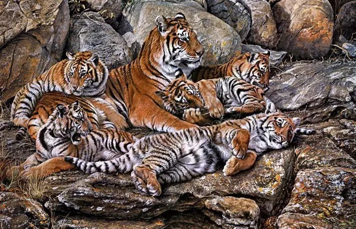 油画世界 英国艾伦·亨特猛兽动物画插图1