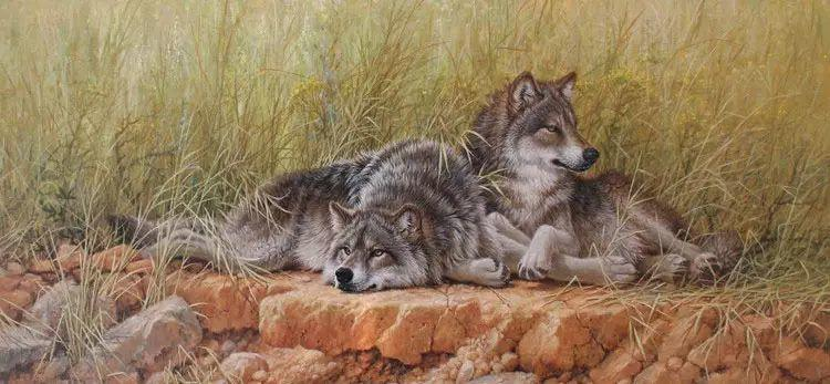 油画世界 英国艾伦·亨特猛兽动物画插图7
