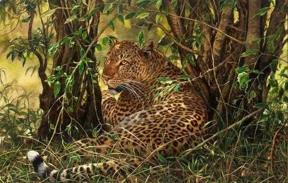 油画世界 英国艾伦·亨特猛兽动物画插图9