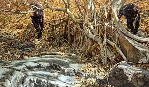 油画世界 英国艾伦·亨特猛兽动物画插图17