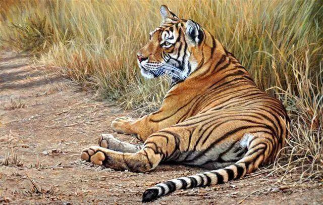 油画世界 英国艾伦·亨特猛兽动物画插图21