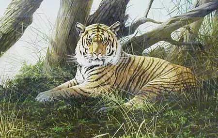 油画世界 英国艾伦·亨特猛兽动物画插图23