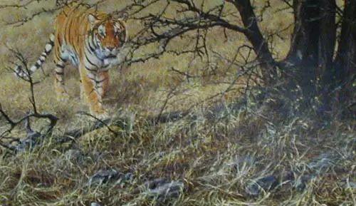 油画世界 英国艾伦·亨特猛兽动物画插图25