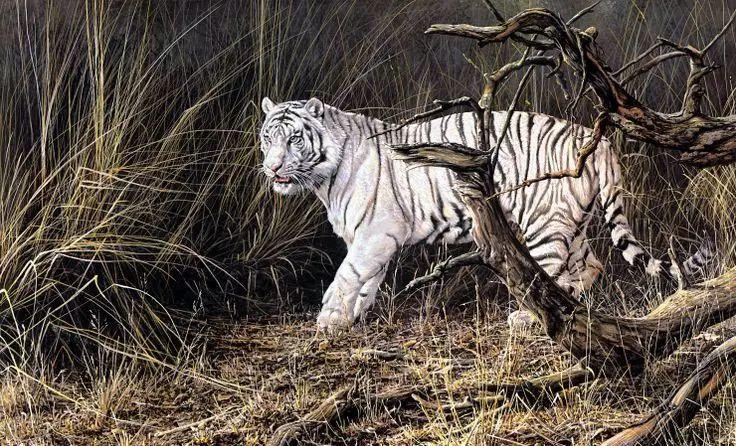 油画世界 英国艾伦·亨特猛兽动物画插图29