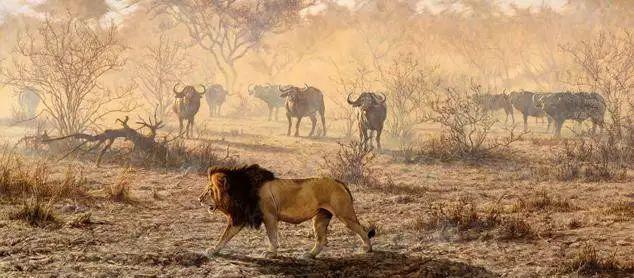 油画世界 英国艾伦·亨特猛兽动物画插图39