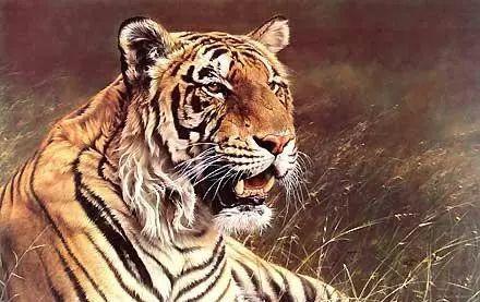 油画世界 英国艾伦·亨特猛兽动物画插图43