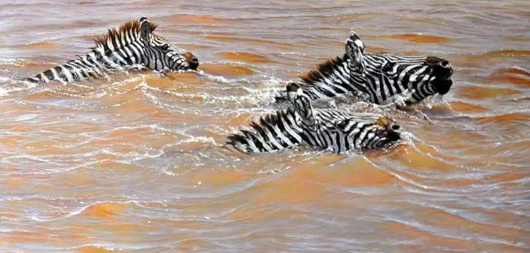 油画世界 英国艾伦·亨特猛兽动物画插图45