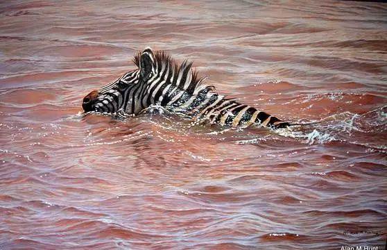 油画世界 英国艾伦·亨特猛兽动物画插图47
