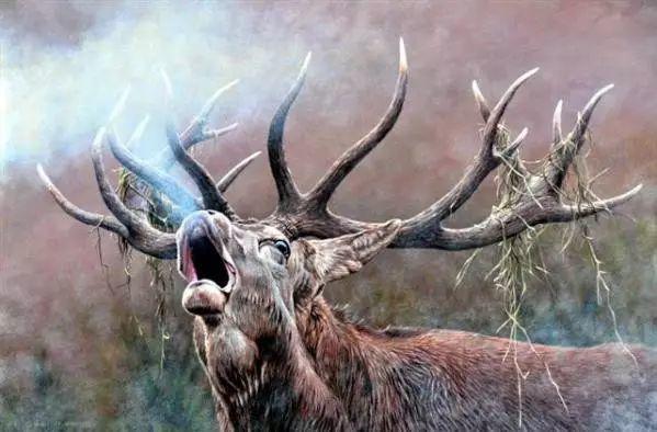 油画世界 英国艾伦·亨特猛兽动物画插图65