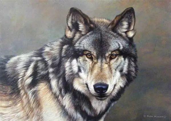油画世界 英国艾伦·亨特猛兽动物画插图67