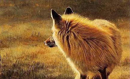 油画世界 英国艾伦·亨特猛兽动物画插图69