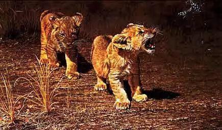 油画世界 英国艾伦·亨特猛兽动物画插图75