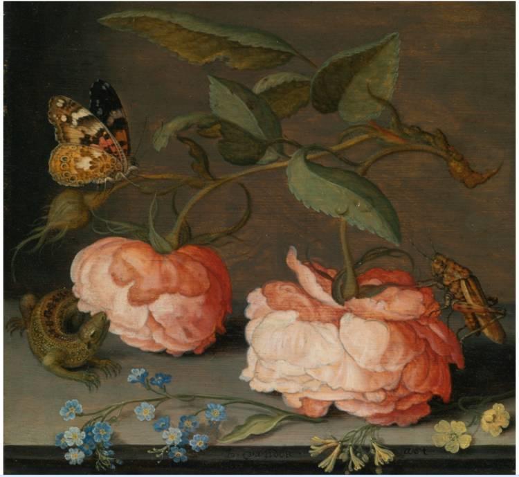 花卉静物 荷兰画家Balthasar van der Ast作品插图13