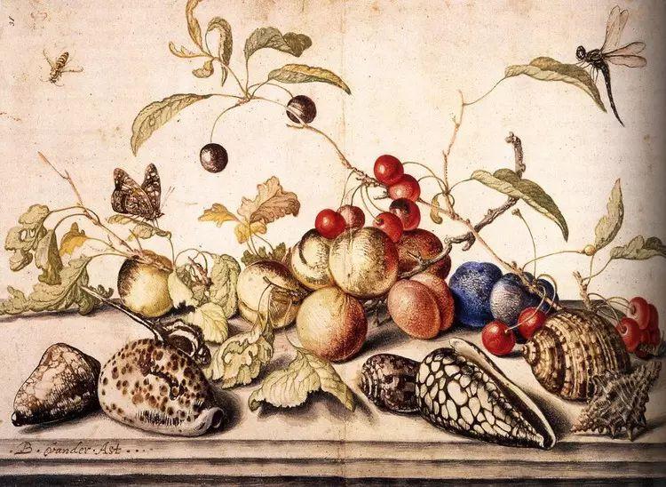 花卉静物 荷兰画家Balthasar van der Ast作品插图85