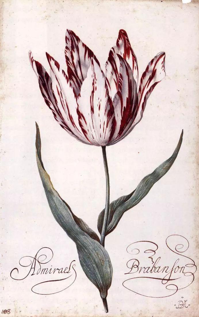 花卉静物 荷兰画家Balthasar van der Ast作品插图87