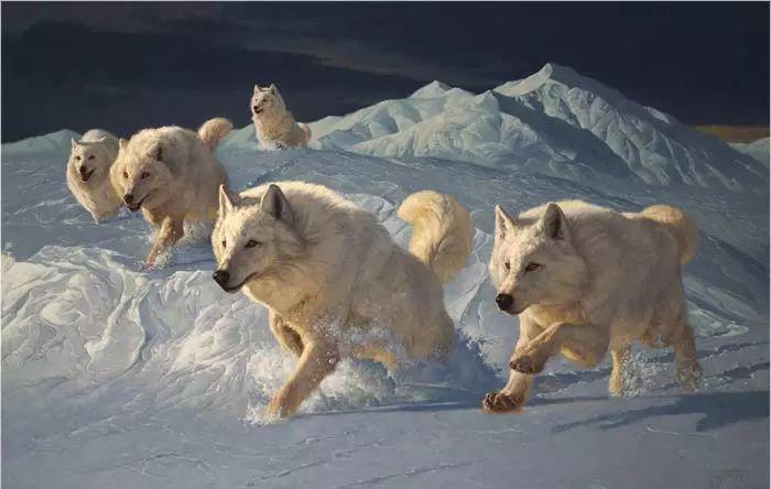 美国Greg Beecham野生动物画插图3
