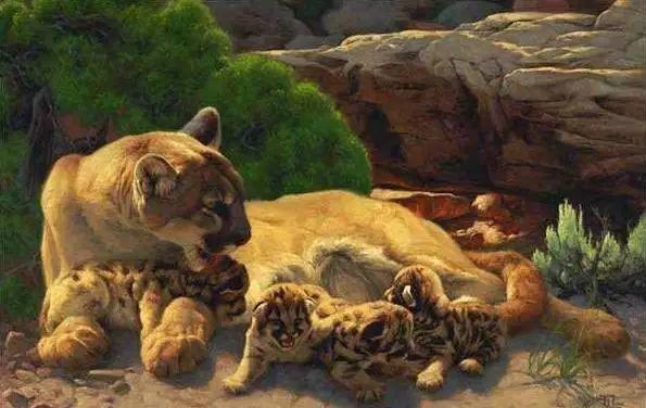 美国Greg Beecham野生动物画插图7