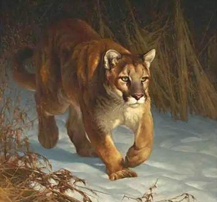 美国Greg Beecham野生动物画插图9