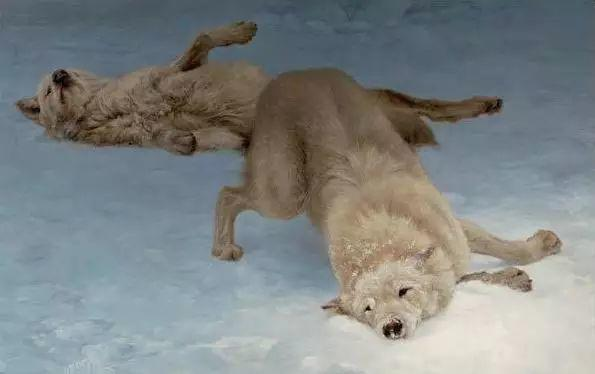 美国Greg Beecham野生动物画插图11