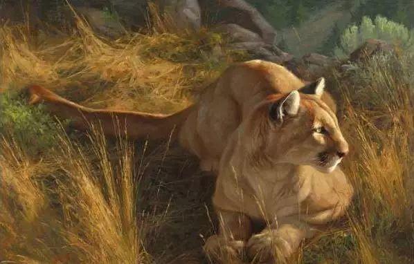 美国Greg Beecham野生动物画插图17