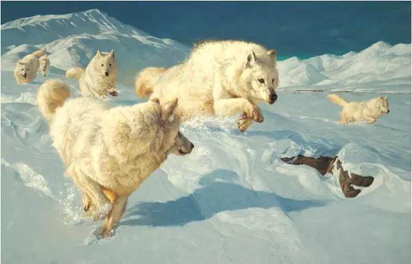 美国Greg Beecham野生动物画插图19