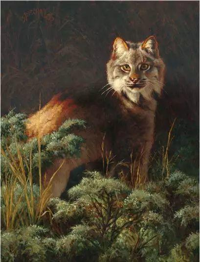 美国Greg Beecham野生动物画插图27
