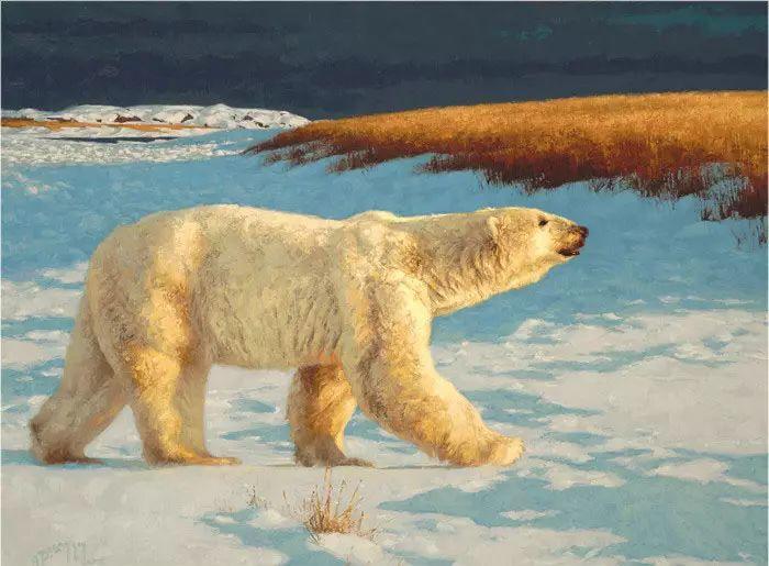 美国Greg Beecham野生动物画插图35