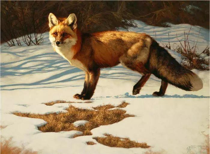 美国Greg Beecham野生动物画插图39