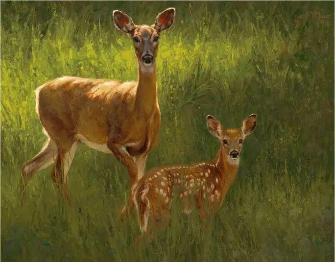 美国Greg Beecham野生动物画插图43