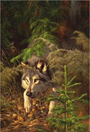 美国Greg Beecham野生动物画插图45