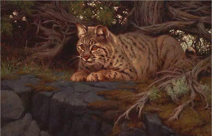 美国Greg Beecham野生动物画插图47