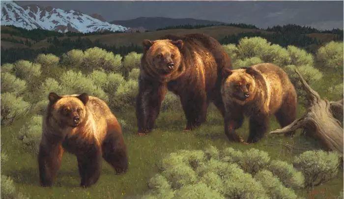 美国Greg Beecham野生动物画插图49