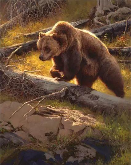 美国Greg Beecham野生动物画插图59