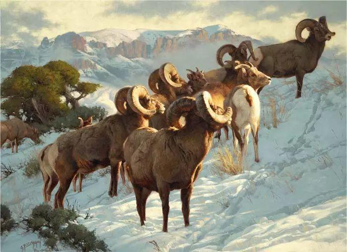 美国Greg Beecham野生动物画插图63