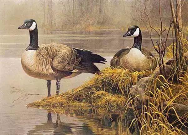 加拿大艺术家 Robeert bateman动物绘画插图5