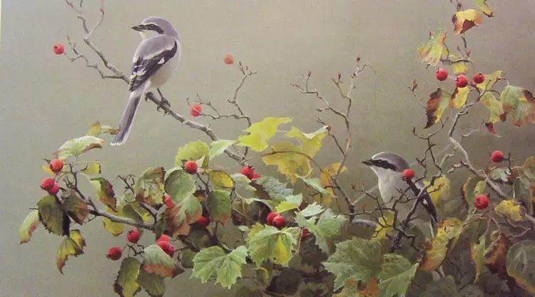加拿大艺术家 Robeert bateman动物绘画插图25