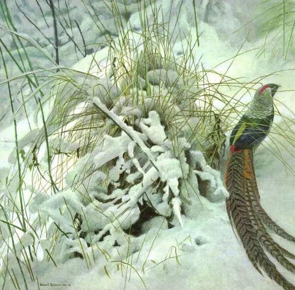 加拿大艺术家 Robeert bateman动物绘画插图31