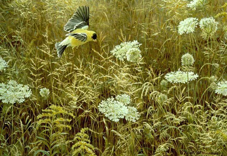 加拿大艺术家 Robeert bateman动物绘画插图33