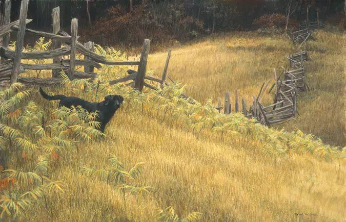 加拿大艺术家 Robeert bateman动物绘画插图45
