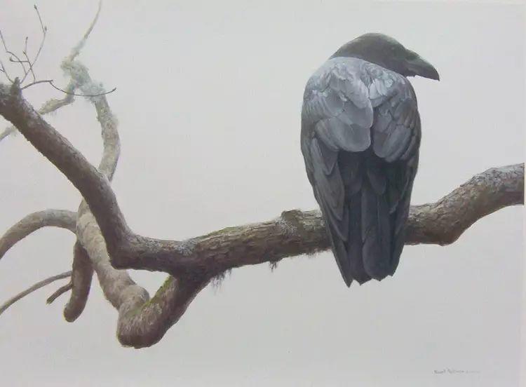 加拿大艺术家 Robeert bateman动物绘画插图49